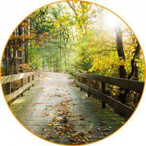 Skywood bridge