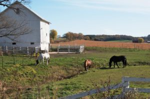 three horses grazing in a field outside a barn